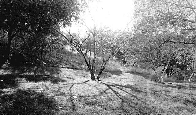 GriffithPark1934-1.jpg